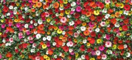 65526-muur-met-bloemen